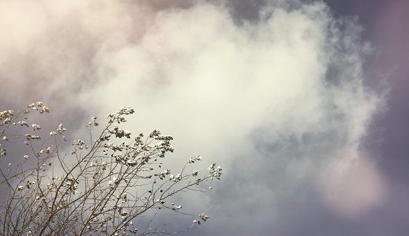 Dem Himmel ganz nah, kann man auch in einer anonymen Grabstelle sein.